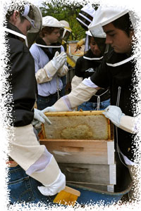 Enviroleaders get busy with the bees