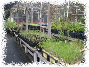 Drop In Volunteer Day at the Nursery